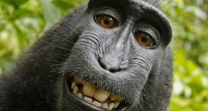 PETA sues to give monkey the copyright of selfie photos
