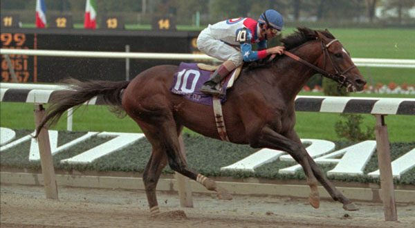 In this Oct. 28, 1995, file photo, Cigar, ridden by Jerry Bailey, heads down the homestretch en route to victory in the Breeders Cup Classic at Belmont Park, in Elmont N.Y. Cigar, the two-time Horse of the Year whose 16-race winning streak is considered one of racing's greatest achievements, died Tuesday night, Oct. 7, 2014, in Lexington, Ky.  He was 24. (AP Photo/Kevin J. Larkin, File)