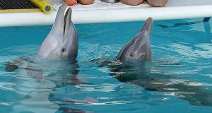 Johns Hopkins prof has high hopes for dolphin game