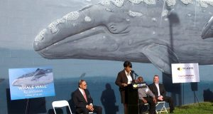 Mayor Stephanie Rawlings-Blake rededicates a whale mural on a building owned by St. John Properties Inc. (Courtesy Lawrence Howard & Associates)