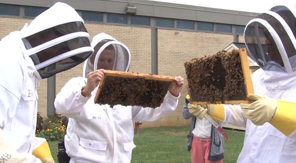 Declining bee populations nationwide are motivating prison programs like the one at Maryland Correctional Training Center in Hagerstown, above. (Capital News Service)