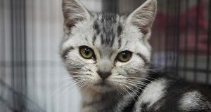 """(Flickr / bfishadow / """"Cat in Cage"""" / CC BY 2.0 / cropped and resized)"""