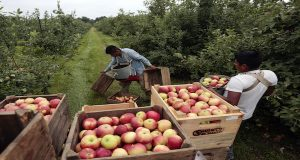 In this July 9 file photo, workers harvest early apples at Samascott Orchards in Kinderhook, N.Y. The Commerce Department releases second-quarter gross domestic product on Thursday, Aug. 27, 2015. (AP Photo/Mike Groll, File)