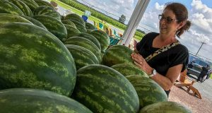 Teresa Huseman, southern Maryland resident, picking out a locally grown watermelon at Wright's Market in Mardela Springs on the way back from vacation in Ocean City, which is a tradition her family follows every year. (The Daily Record/Maximilian Franz)