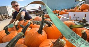 10-6-2016 Westminster, MD- Hugh Rodell, owner of Seasonal Evergreen, who contracts with the army and air force exchange service, is seen here picking up 17 bins of pumpkins from Baugher's Orchard & Farm in Westminster. He has been buying from Baugher's for the past 8 years and this shipment is going all the way to to Fort Myer and Fort Belvoir in Virginia to be setup in farm patches for military families to buy for the holidays. (The Daily Record/ Maximilian Franz).