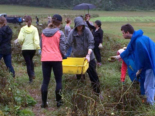 Crosby Marketing Communications employees brave the rainy Oct. 4 weather to help out Clagett Farm in Upper Marlboro during its community service day. (Crosby Marketing Communications photo)