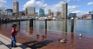 A child feeds ducks at the Baltimore Harbor. (The Daily Record / Maximilian Franz)