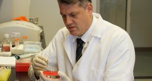 Professor Mark Shirtliff works in his lab in the Department of Microbial Pathogenesis at the University of Maryland School of Dentistry. (University of Maryland Baltimore photo)
