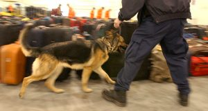 A dog sniffs baggage at the Baltimore cuise terminal. (File)