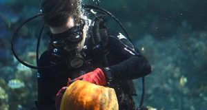 10-30-17 BALTIMORE, MD- What scarier way to carve a pumpkin on Halloween than underwater with some sharks. The National Aquarium has made it a tradition in recent years to have its divers plunge into their Black Tip Reef Shark exhibit to celebrate the holiday. On October 31st, they will be hosting two pumpkin-carving sessions at 10am and 2pm, which will be included with the price of admission. On Monday, aquarium dive safety assistant Taylor Grace carved a sea turtle design in a pumpkin while being circled by Calypso, the National Aquariums green sea turtle.  (The Daily Record/Maximilian Franz)