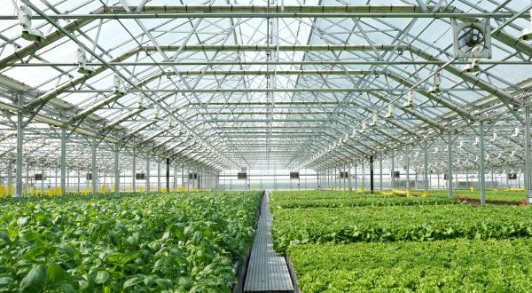 Gotham Greens plans to open a 100,000-square-foot greenhouse in Baltimore County. The company already has similar operations in Chicago, pictured above, and New York. (Photo Courtesy Gotham Greens/Julie McMahon)