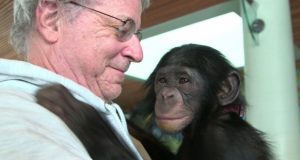 "Animal rights lawyer Steven M. Wise, as seen in the documentary ""Unlocking the Cage,"" with a chimp named Teko. (Pennebaker Hegedus Films - HBO.)"