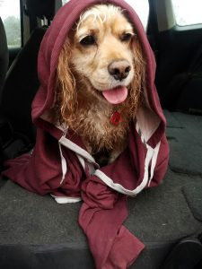 Love the smell of wet dog? Then by all means, volunteer at BARCS!