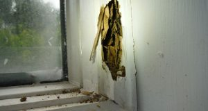 A photo of termite damage an Annapolis couple said they discovered after buying their home. (Submitted0