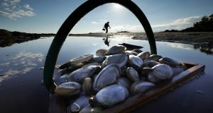 A friend's basket of clams sit in the water as Mike Suprin, of Rollinsford, N.H., calls it a day after filling his basket with softshell clams at Cape Porpoise in Kennebunkport, Maine. A new study concludes that valuable species of shellfish, including softshell clams, have become harder to find on the East Coast because of degraded habitats caused by a warming environment. (AP Photo/Robert F. Bukaty, File)