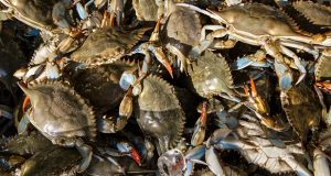 FILE -  In this June 1, 2016 file photo live blue crabs are displayed for sale at the Maine Avenue Fish Market in Washington.  (AP Photo/J. Scott Applewhite, file)