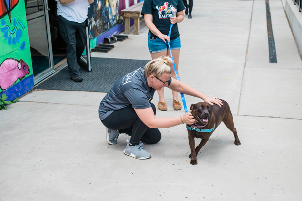 Jessica Moore, audit staff, helps steady an energetic dog during her stint volunteering at the Baltimore Humane Society. (Photo courtesy of SC&H Group)