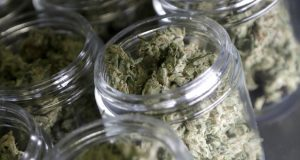 FILE- In this March 22, 2019 file photo, marijuana buds are seen in prescription bottles after being sorted at Compassionate Care Foundation's medical marijuana dispensary in Egg Harbor Township, N.J. Most of the nearly 700 different groups that filed 2,163 marijuana business applications in Missouri are not from the state. Some Missourians are concerned that ownership of the industry will disproportionately go to firms outside Missouri. (AP Photo/Julio Cortez, File)