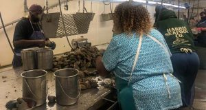 Workers inside of Harris Seafood Co. on Kent Island clean oysters and prepare them to be shucked. (Hannah Smith/Capital News Service)