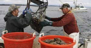 Robert T. Brown, right, president of the Maryland Waterman's Association, dredges for oysters with Matt Bernd on the Chesapeake Bay near Ridge in November 2019. Both watermen and oyster farmers have been hit hard by the coronavirus pandemic. (AP Photo/Brian Witte)